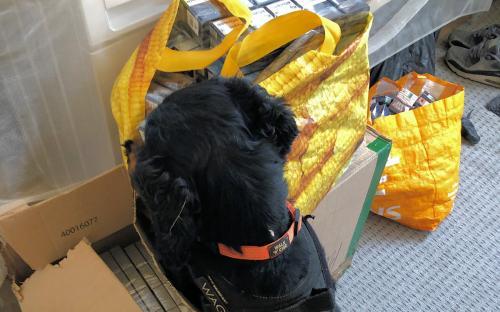 Sniffer dog, Mostyn